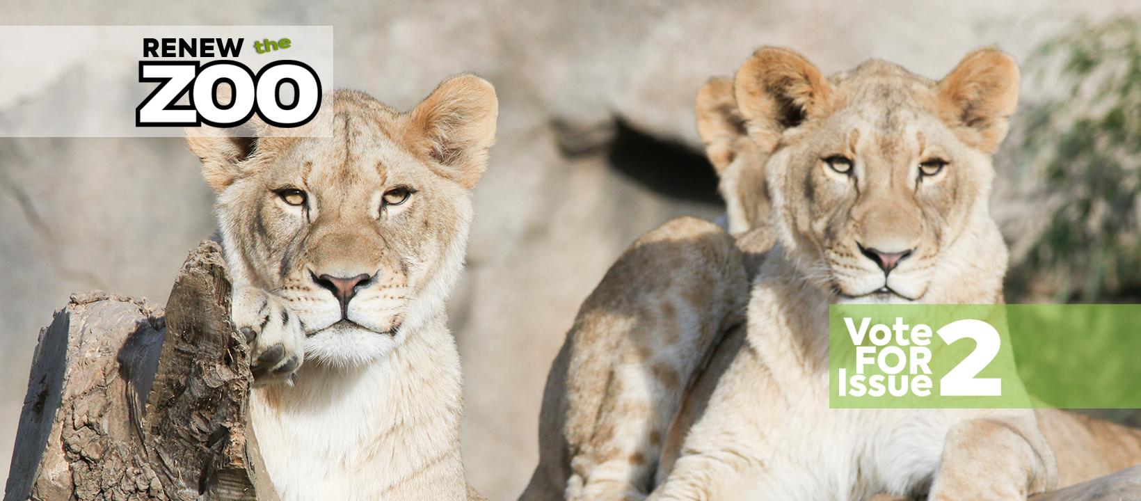 lion_cubs2