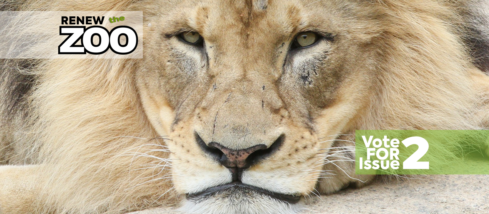 lion_john