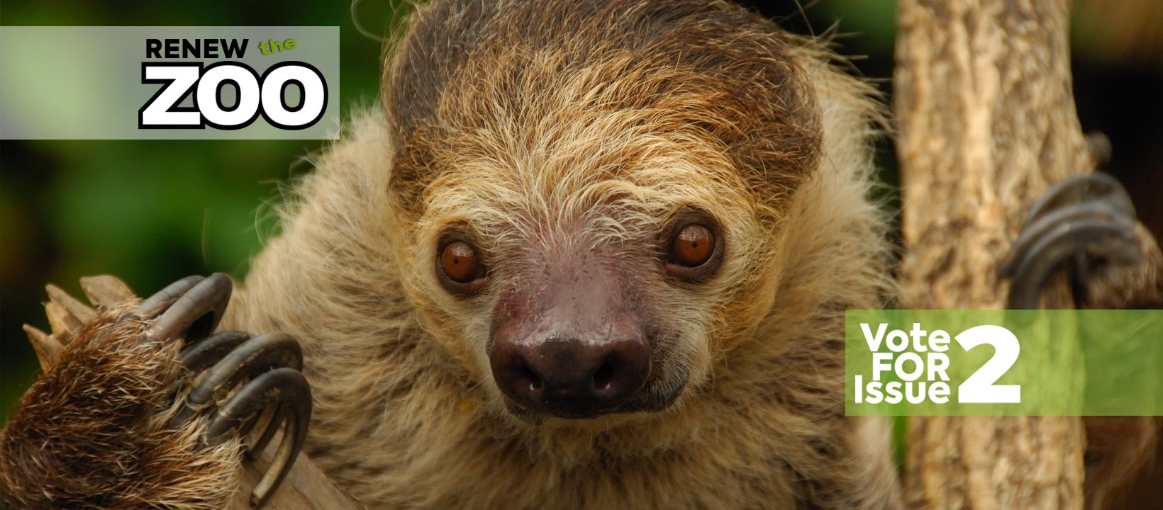 moe_sloth